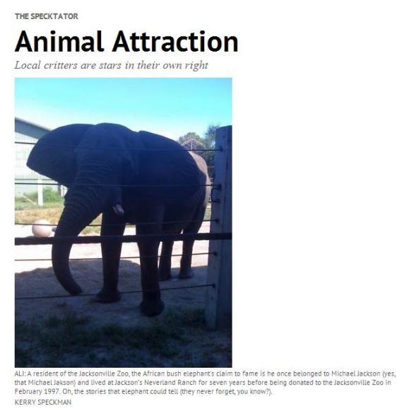 Ali (MJ elephant)